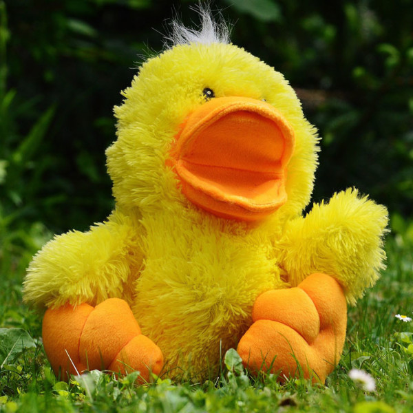 Three boys, impossible to keep still so here's a duck!